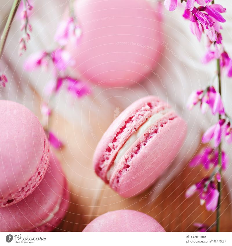 Food Pink Round Candy Dessert To have a coffee