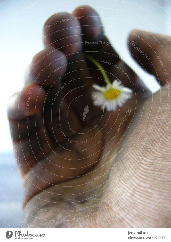 Tyre change I Hand Flower Daisy Delicate Fine Dirty Converse Black Unconscious Strong Feeble Joie de vivre (Vitality) Grief Lose Workshop Spring Might