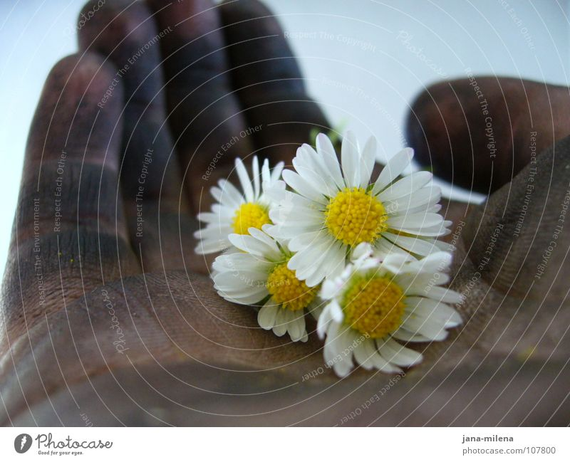 Tyre change II Hand Flower Daisy Delicate Fine Dirty Converse Black Unconscious Strong Feeble Safety (feeling of) Friendship Give Contentment