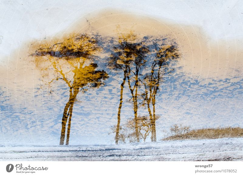 coastal forest Nature Landscape Plant Sand Water Beautiful weather Tree Wind cripple Forest Coast Beach Baltic Sea Maritime Brown White Bizarre Environment