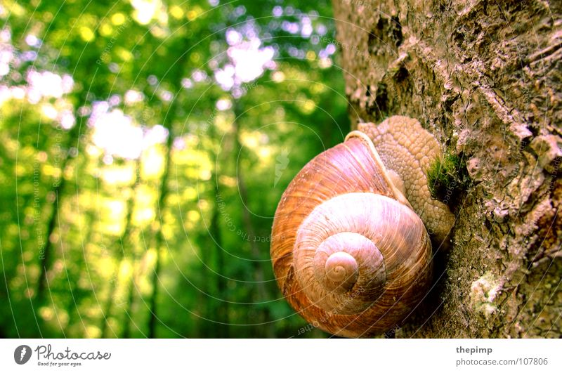 high up Slug Snail shell Brown Green Spiral Tree Tree bark Forest Tree trunk Macro (Extreme close-up) Close-up Sun