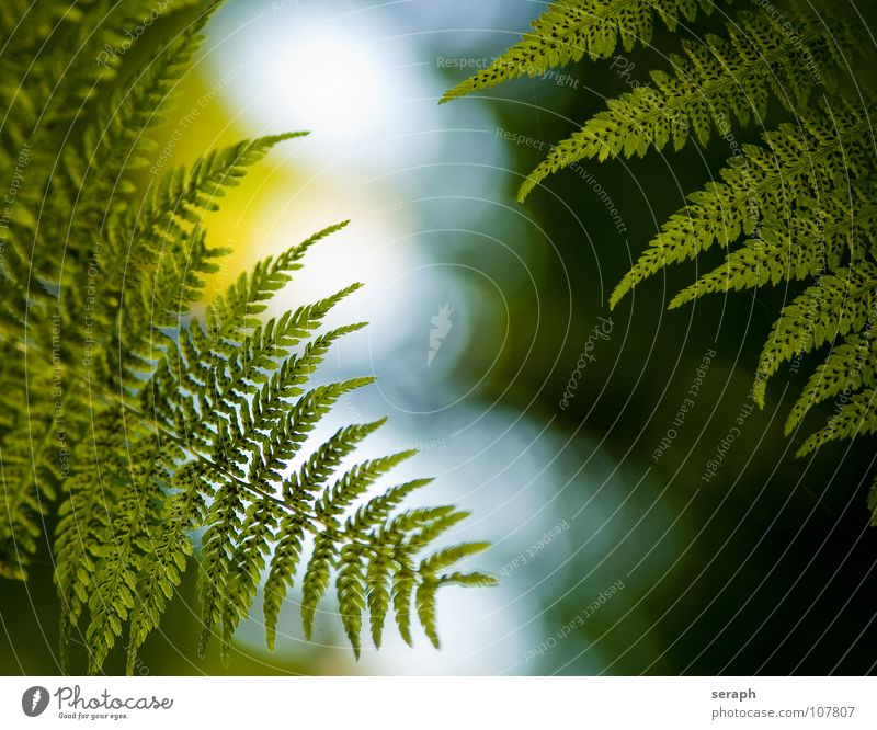 Fern Plants Nature Green Leaf Natural Growth Fresh Stalk Botany Delicate Leaf green Pteridopsida Organic Plumed Spore