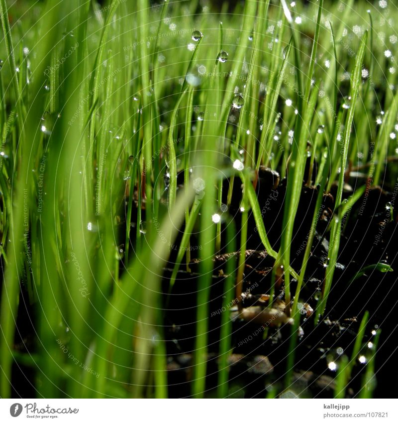 Green Plant Meadow Grass Spring Growth Floor covering Bushes Lawn Agriculture Pasture Grass surface Blade of grass Botany Gardening Anticipation