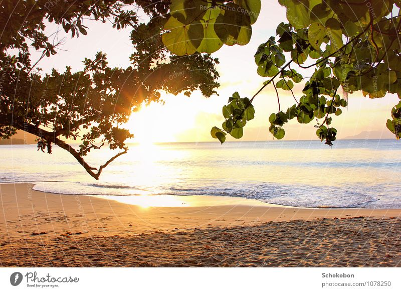 Nature Vacation & Travel Water Sun Tree Relaxation Ocean Calm Far-off places Beach Natural Sand Horizon Gold Energy To enjoy