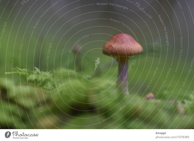 Mushroom III Environment Nature Plant Animal Earth Sunlight Autumn Beautiful weather Park Forest Discover Relaxation Stand Growth Exceptional Fragrance Healthy