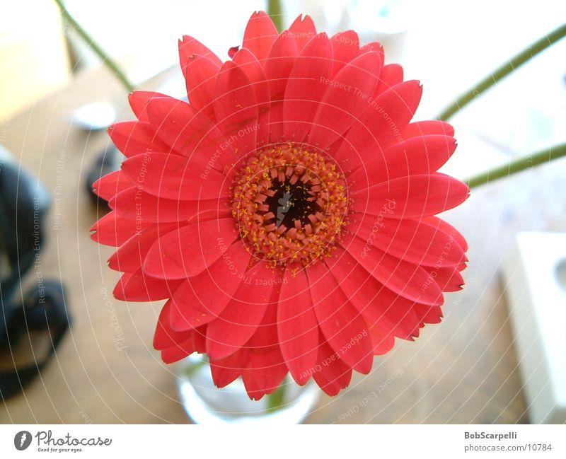 Blümli_03 Flower