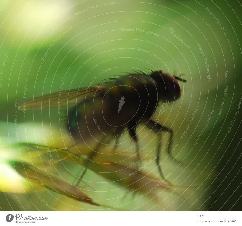 fly in the wind Mosquitos Insect Blur Grass Green Biology Animal Small Crawl Macro (Extreme close-up) Close-up Fly Abstract Wing Hair and hairstyles Flying
