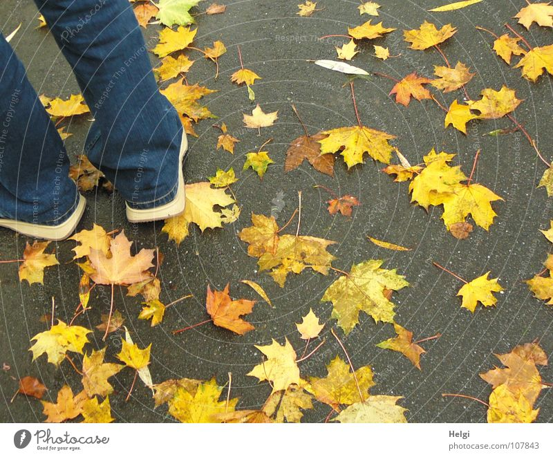 Male legs in jeans and shoes on a path with yellow autumn leaves Autumn Leaf To fall Side by side Together Consecutively Maple tree Maple leaf Stalk Footwear