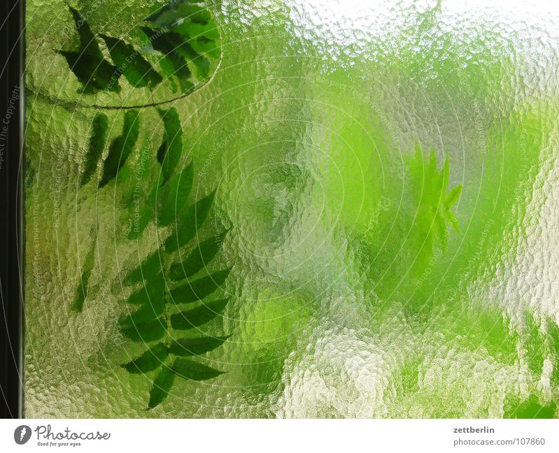 chamois {n} = chamois Leaf Window Green Transparent Translucent Background picture Foliage plant Oxygen Renewable raw materials Photosynthesis Detail Summer