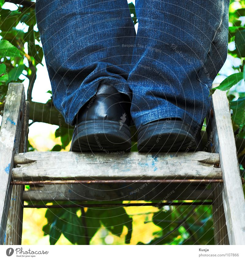 Man Green Blue Red Leaf Black Autumn Wood Footwear Climbing Pants Harvest Delicious Collection Ladder Fruit trees