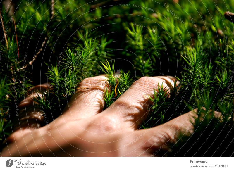 Nature Green Beautiful Summer Tree Hand Winter Yellow Emotions Autumn Grass Small Feasts & Celebrations Air Fresh Dirty
