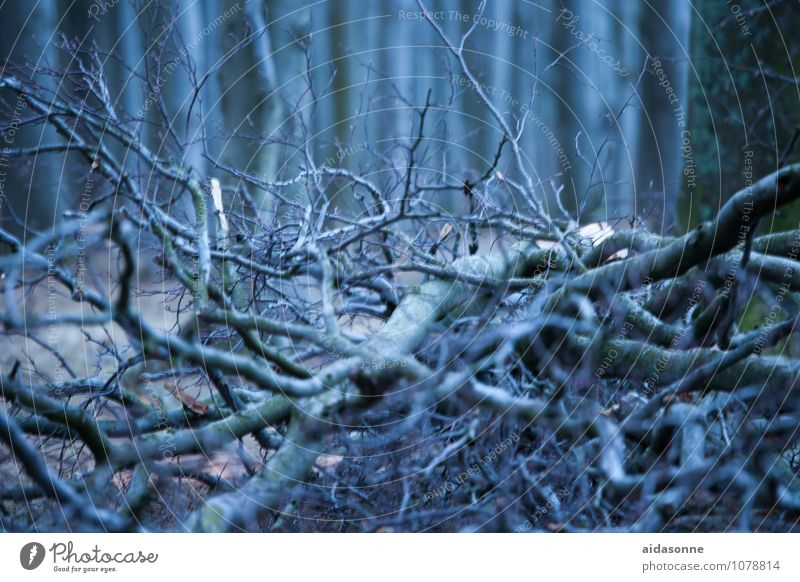 Wood in the forest Nature Landscape Plant Winter Tree Contentment Attentive Calm Authentic Twigs and branches Woodground Forest Ghost tree