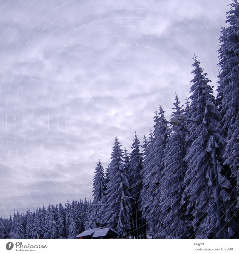 Sky Beautiful White Tree Joy Winter Forest Cold Graffiti Snow Playing Moody Target Hut End Switzerland