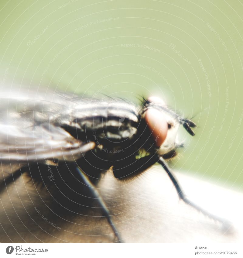 it flies, it flies... Deserted Animal Fly 1 Flying Sit Threat Disgust Creepy Green Black White Bizarre Hair Exceptional Strange Large Pests combative