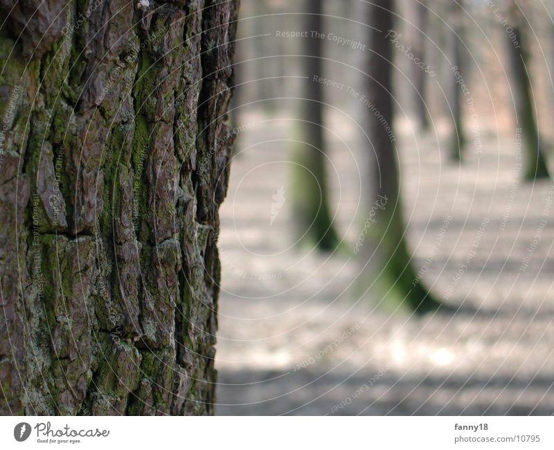 The tree bark Tree Tree bark Forest Macro (Extreme close-up) Nature