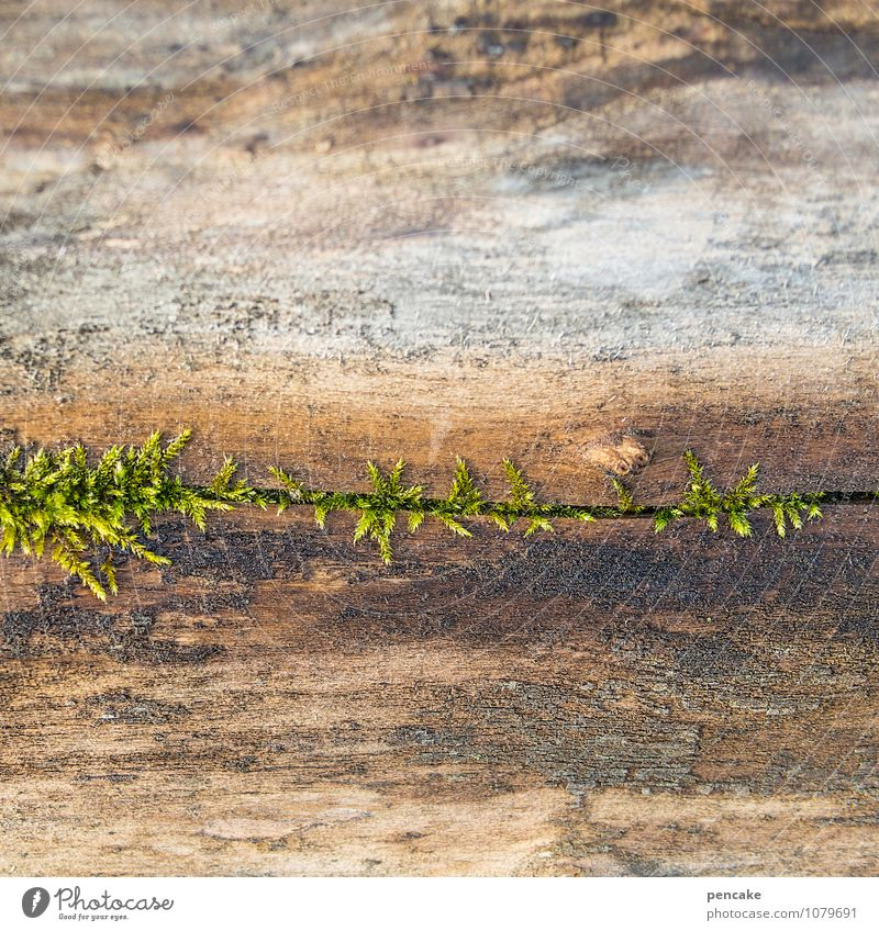 Nature Plant Water Movement Spring Wood Growth Beginning Uniqueness Sign Elements Hope Mysterious Moss Effort Breathe