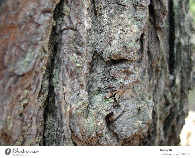 Bark of the tree 2 Tree Tree bark Nature Macro (Extreme close-up)