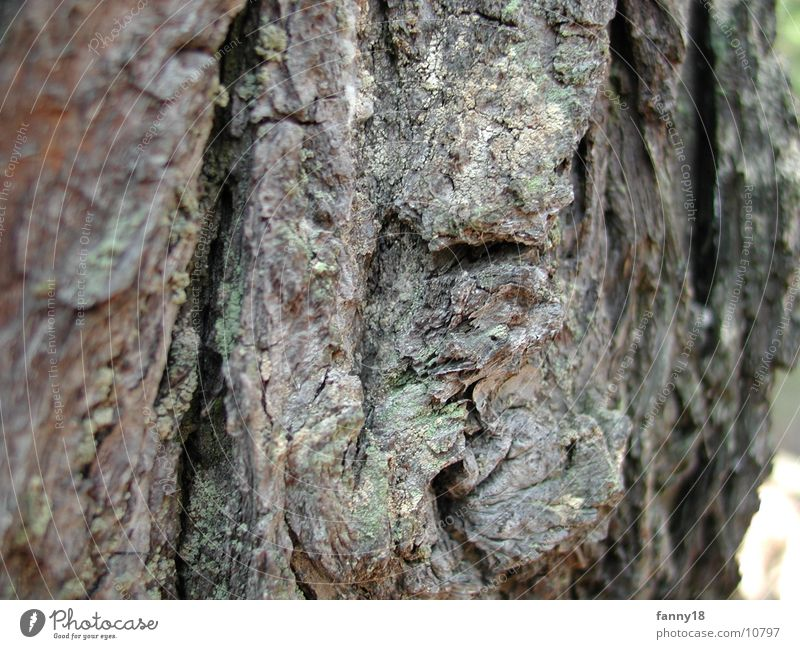 Nature Tree Tree bark Tree trunk Macro (Extreme close-up)