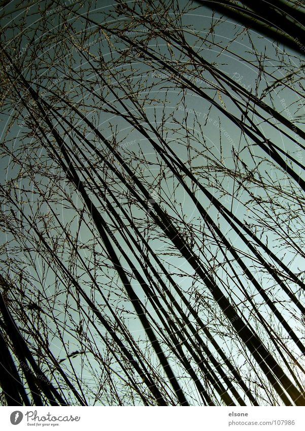 Nature Green Blue Plant Black Autumn Style Above Grass Gray Line Crazy Grain Diagonal Progress Backwards