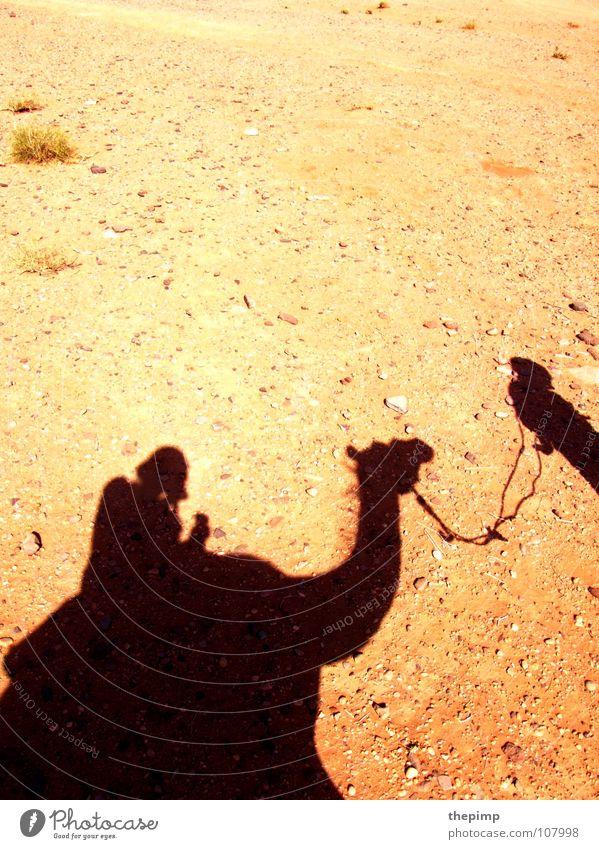 caravan Camel Camel driver Stone desert Gravel Summer Hot Desert Sun Shadow