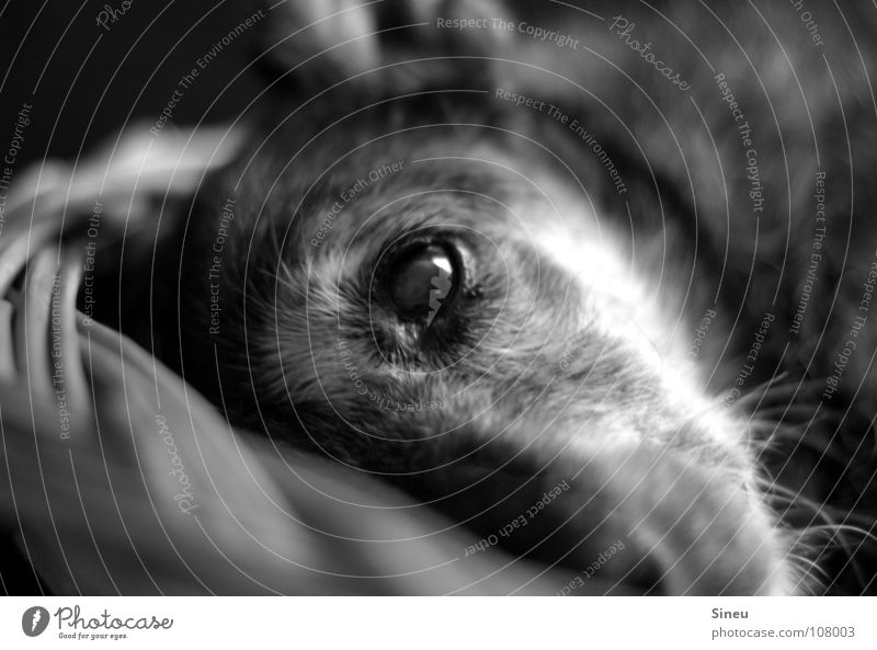 lunch break Black & white photo Interior shot Artificial light Contrast Deep depth of field Animal portrait Looking into the camera Forward Pelt Gray-haired Pet