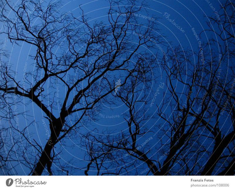 somber Tree Night Dark Eerie Black Blue Twig Branch