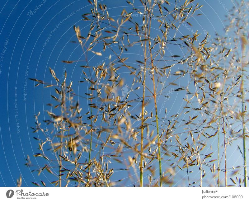 Grasses in autumn Delicate Autumn Multiple Simple Beautiful Blue Sky To go for a walk Many Harvest