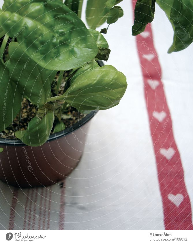 With much love... Basil Plant Herbs and spices Foliage plant Pot Italy Adhere to Green thumb Refreshment Table Herb garden Old hag Healthy Delicious Cooking