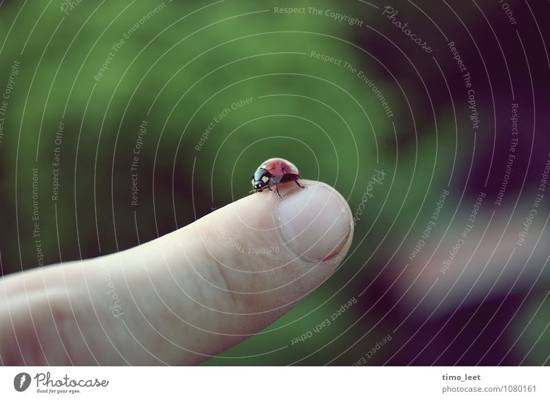 Don't give up Animal Beetle 1 To hold on Crawl Fantastic Infinity Small Near Green Red Trust Love of animals Fear of heights Ladybird Fingers Colour photo