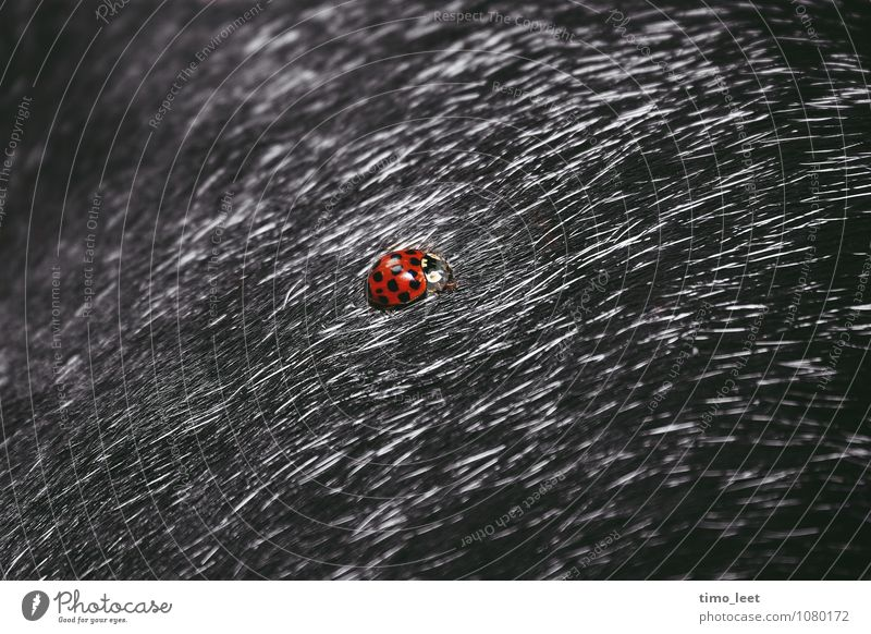 Dog Animal Exceptional Pelt Discover Pet Beetle Ladybird