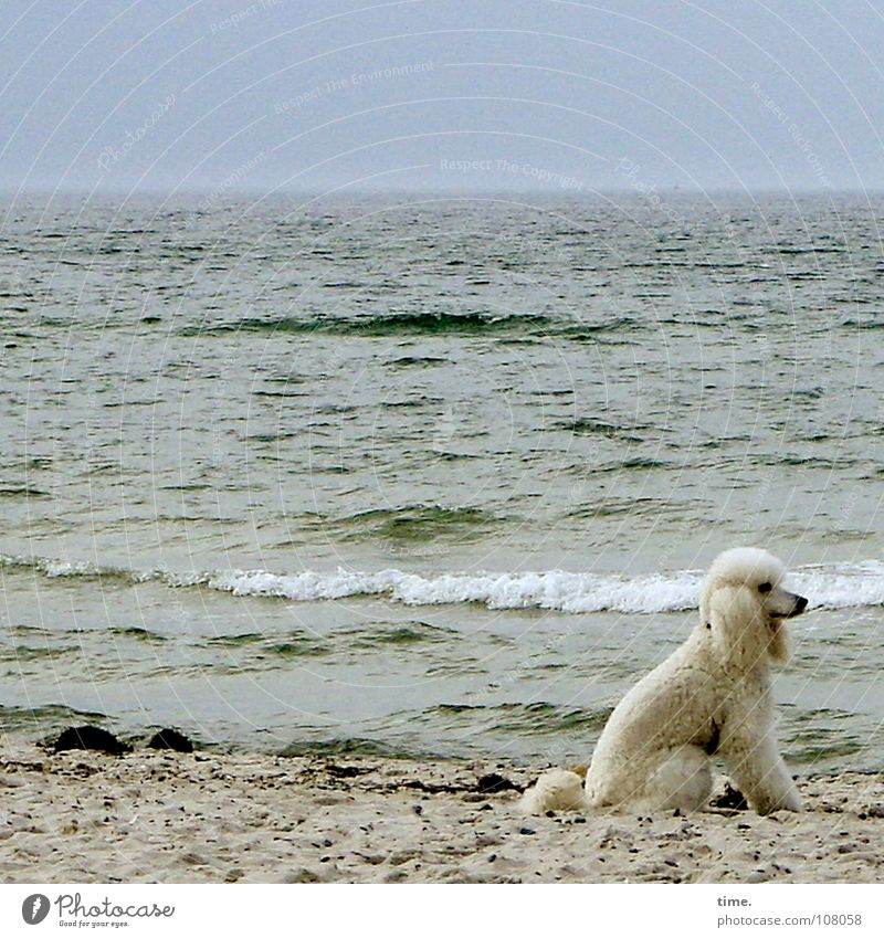 White Ocean Beach Dog Coast Sit Odor Navigation Mammal Marvel Animal