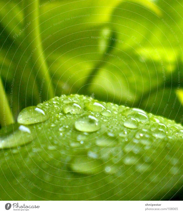 Water Green Plant Leaf Far-off places Dark Autumn Bright Wet Large Drops of water Might Peace Near Damp Deep