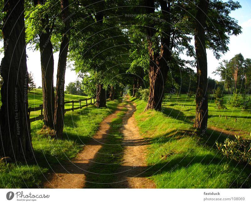 Tree Summer Meadow Garden Lanes & trails Park Avenue Golf course