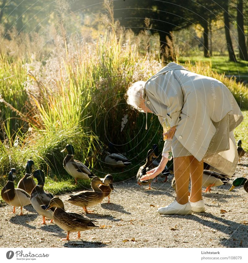 Woman Senior citizen Autumn Happy Contentment Human being Retirement Pond Duck Feeding Peaceful Bird Female senior