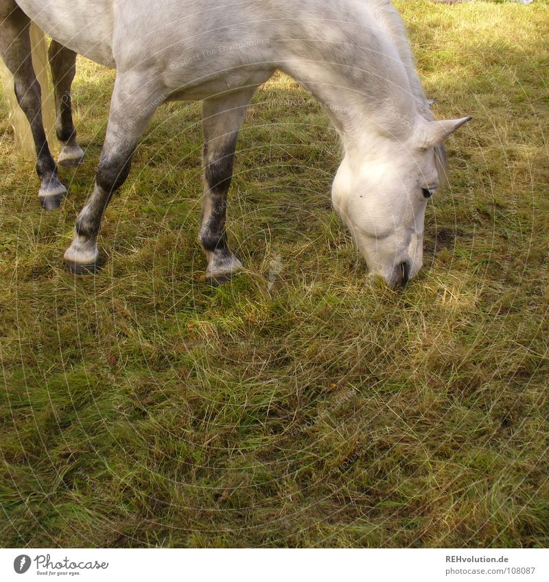 Summer Joy Animal Meadow Nutrition Legs Stand Break Horse Pasture Thin Appetite To enjoy To feed Mammal Bangs