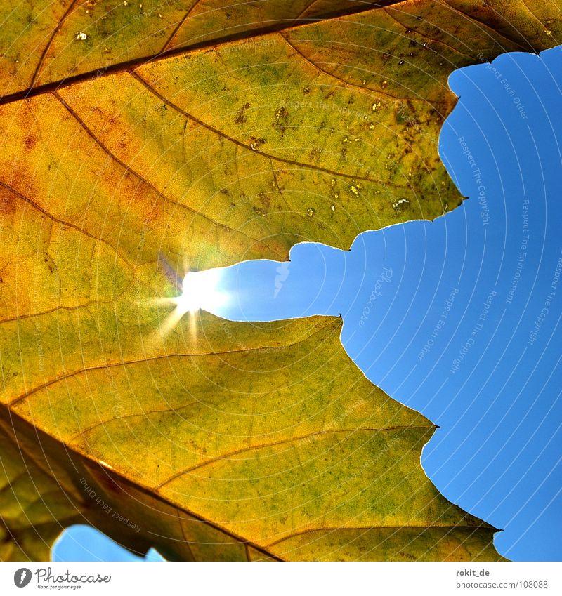 Sun Blue Joy Leaf Yellow Autumn Brown Lighting Like Congratulations