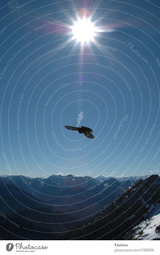 Karwendel Bird Mittenwald Midday sun Mountain Sun Snow Chalk alps Blue