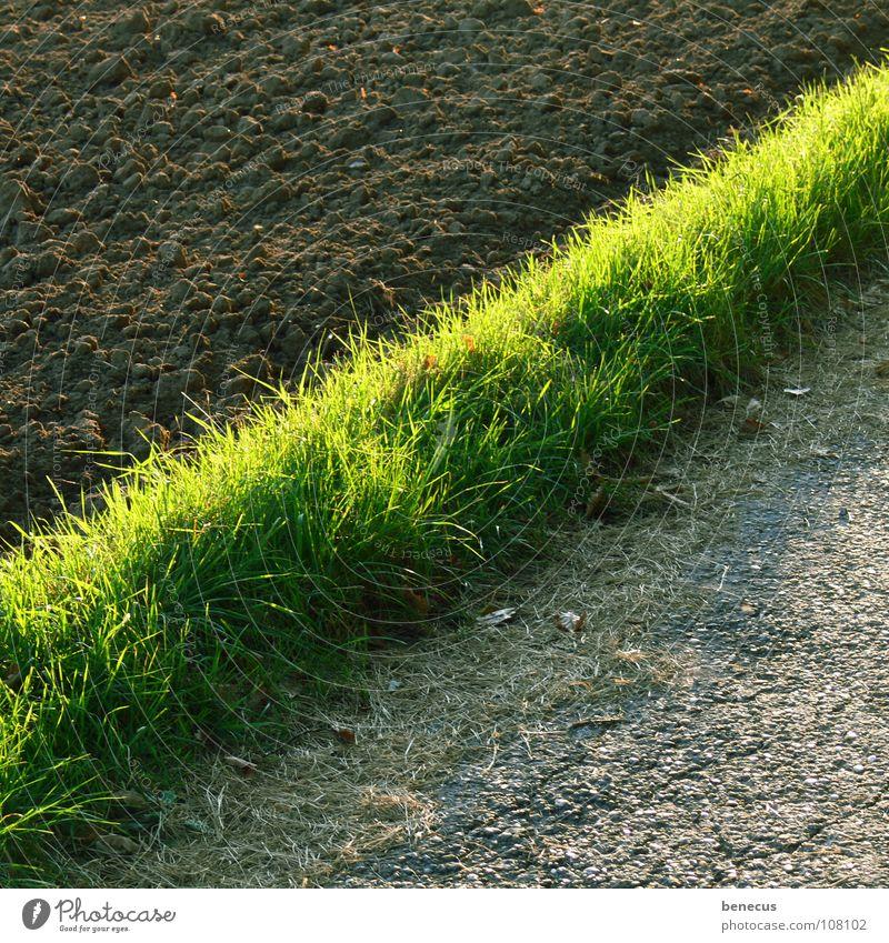 Green Grass Gray Lanes & trails Brown Field Earth Stripe Asphalt Division Footpath Diagonal Agriculture Half Real estate Fertile