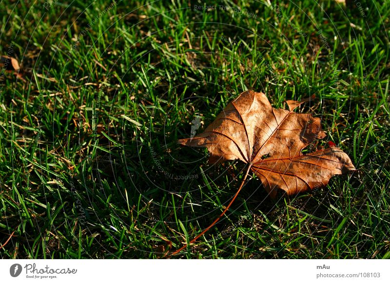 Green Leaf Autumn Grass Gold Autumnal