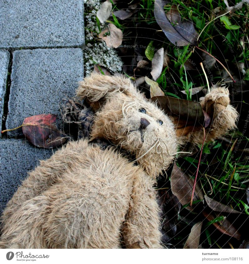 Loneliness Poverty Grief Lie Pelt Infancy Distress Hare & Rabbit & Bunny Doomed Forget Teddy bear Indifference Miss Cuddly toy Exposed