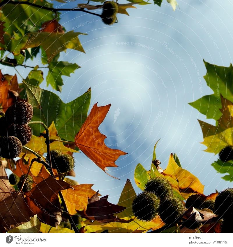 Sky White Sun Green Blue Red Calm Leaf Yellow Autumn Gold Peace Target Transience Seed