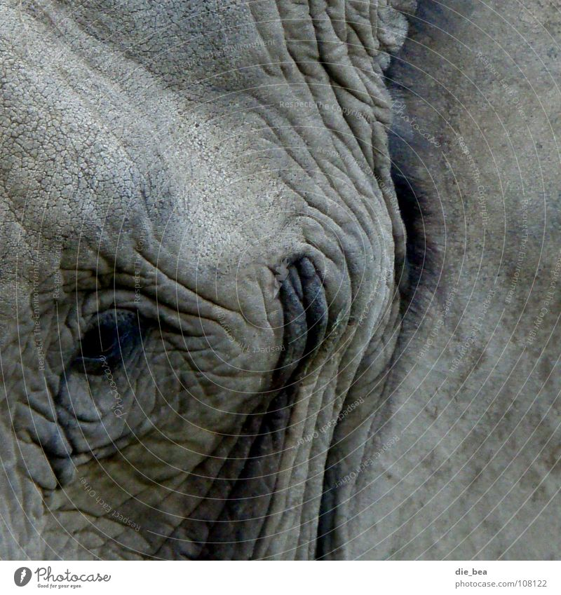 Eyes Laughter Gray Dirty Wrinkles Grinning Mammal Elephant