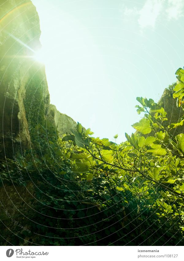 Sky Sun Green Leaf Mountain Rock Europe Bushes Spain Lens flare Fig Patch of light Menorca