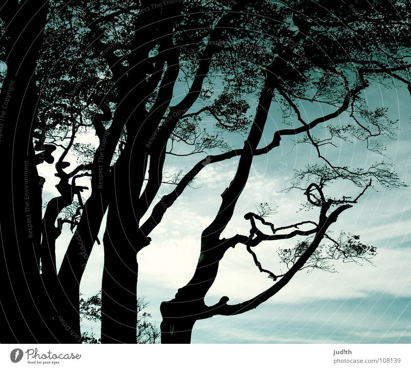 Sky Nature Blue Old Water Green Tree Plant Ocean Beach Leaf Clouds Black Cold Autumn Wood
