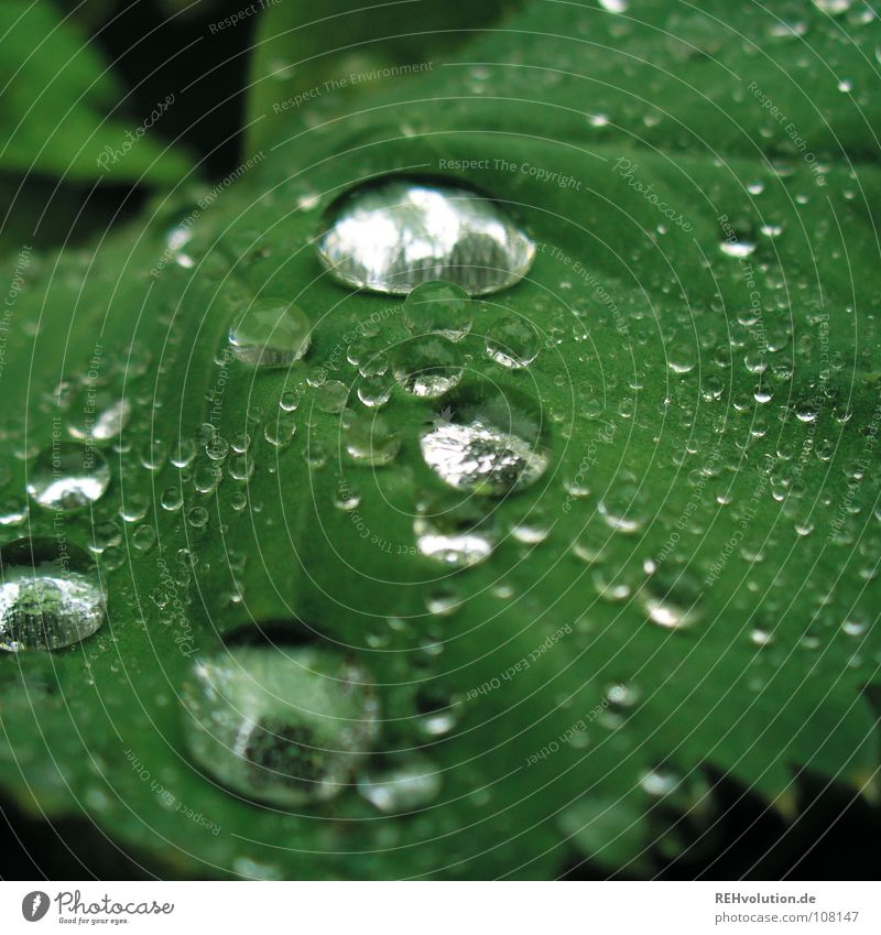 Plant Green Garden Rain Park Glittering Drops of water Wet Soft Damp Smoothness Vessel Hydrophobic