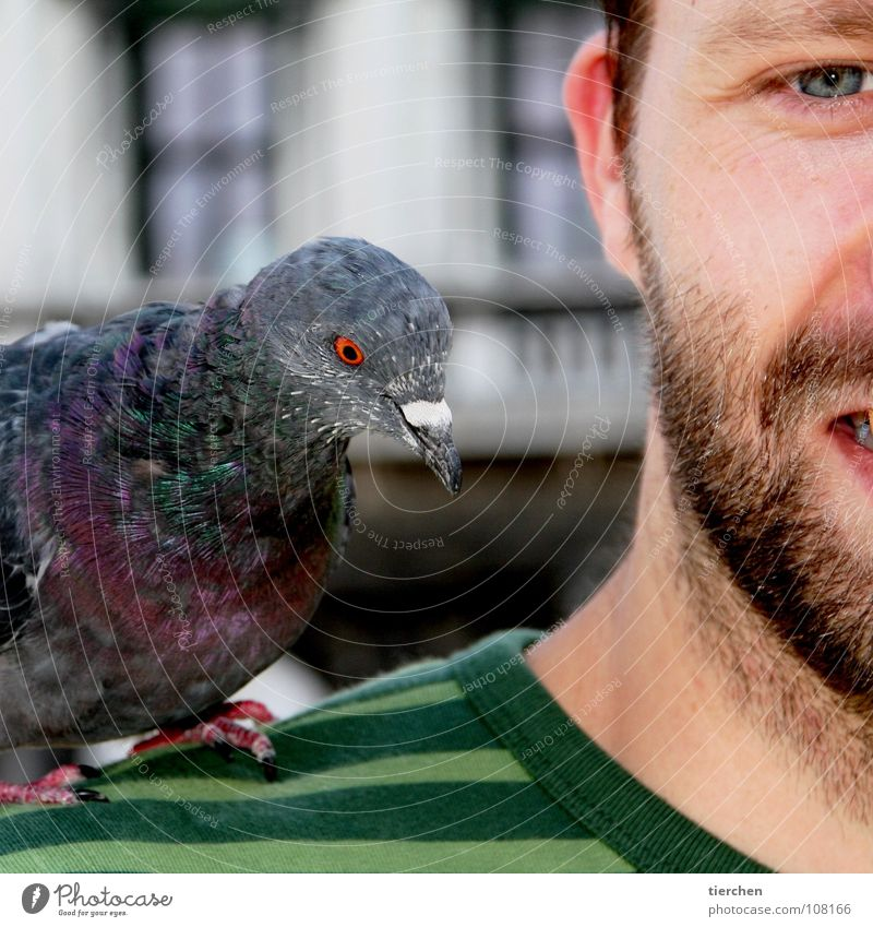 Human being Man Face Animal Eyes Head Bird Feather Ear Facial hair Shoulder Brash Disgust Pigeon Beak Claw