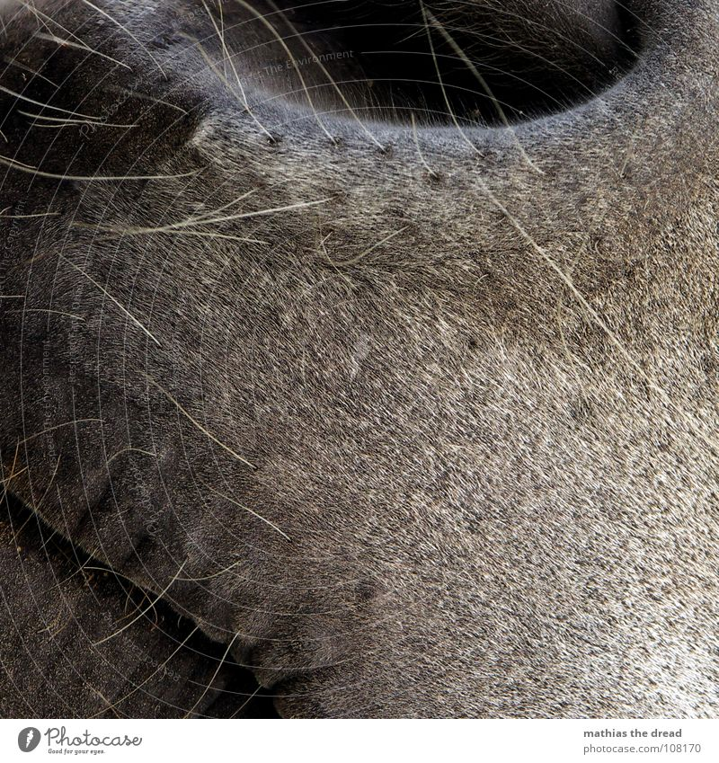 Close by Horse Animal Mammal Nostril Nostrils Opening Bristles Gray Black Glittering Odor Hairline Soft Zoo Petting zoo Macro (Extreme close-up) Close-up