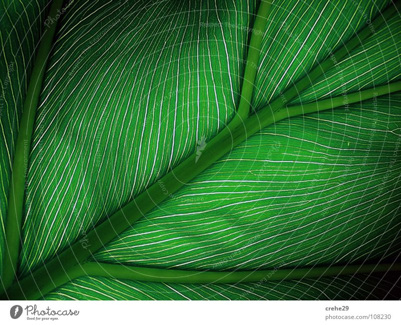 Nature Beautiful Green Plant Leaf Style Warmth Physics Palm tree