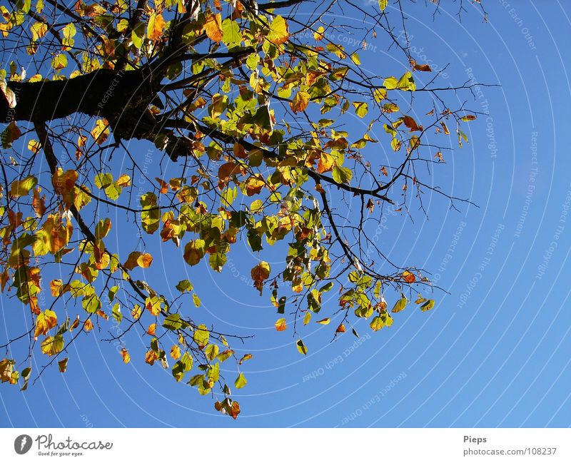 Old Sky Tree Plant Leaf Yellow Autumn Landscape Weather To fall Branch Transience Seasons Tree trunk Goodbye Austria