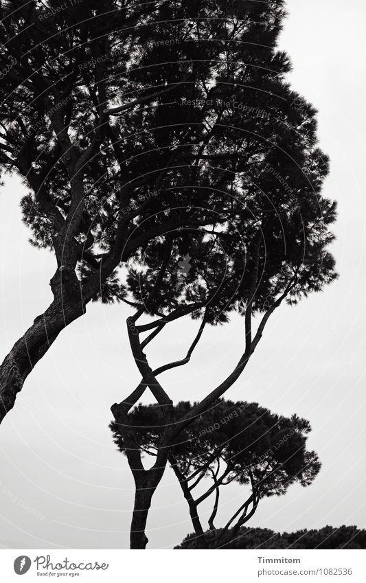 Sky Nature Vacation & Travel Plant Tree Dark Black Environment Emotions Natural Gray Park Growth Esthetic Italy Stone pine